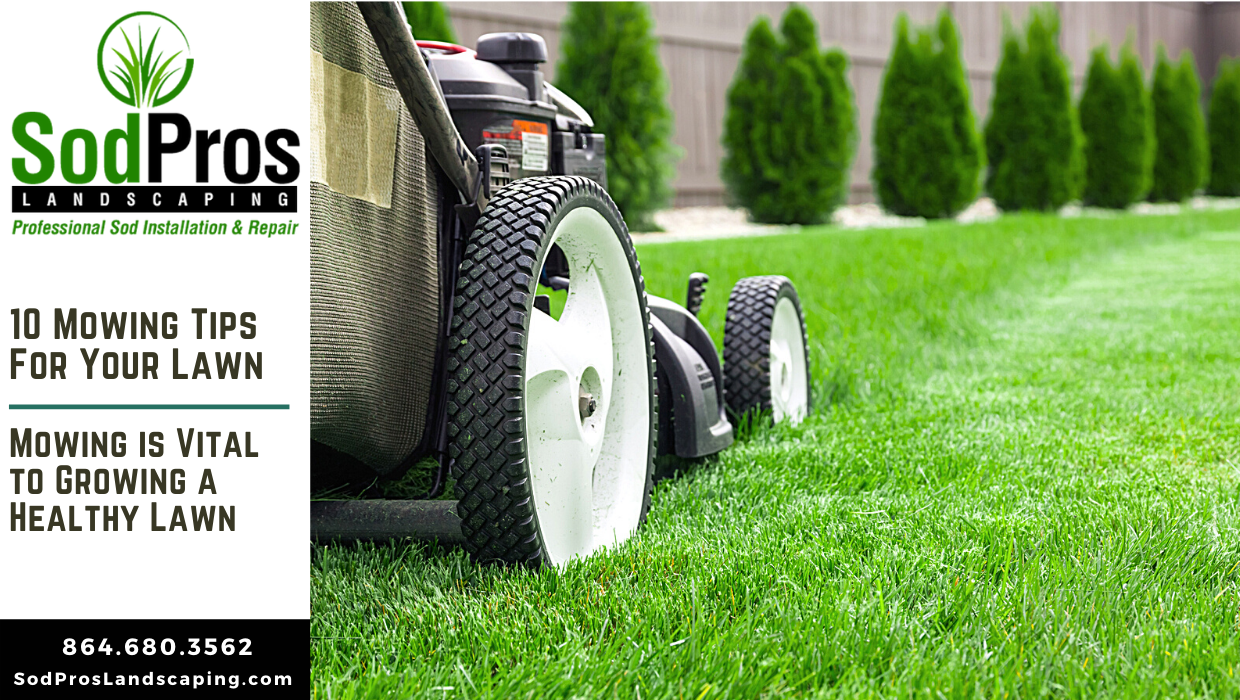 10 Lawn Mowing Tips